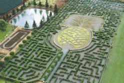 Những mê cung bằng cây đẹp mắt và phức tạp khắp thế giới