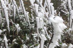 Mẫu Sơn xuống âm 1 độ C, băng phủ trắng xóa