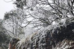Người dân Thủ đô đổ xô lên Sapa ngắm tuyết