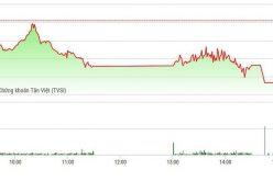 Chứng khoán ngày 8/2: Cổ phiếu thi nhau giảm, VN-Index lại rơi gần 1,7%