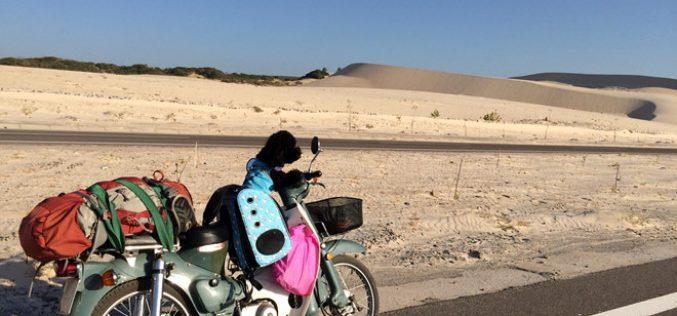 Hành trình xuyên Việt về quê ăn tết của chú chó Poodle