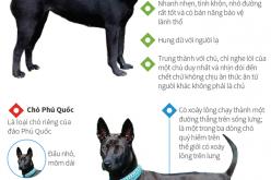 Bốn giống chó quý của Việt Nam