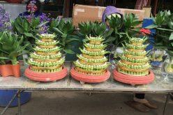 Thị trường hoa, cây cảnh Tết: Tên càng kêu, càng hút khách