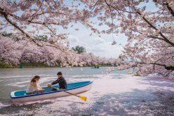 Những lễ hội giúp bạn 'kéo dài mùa xuân'