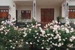 Vườn hồng đẹp như tranh của gia đình Hà Nội