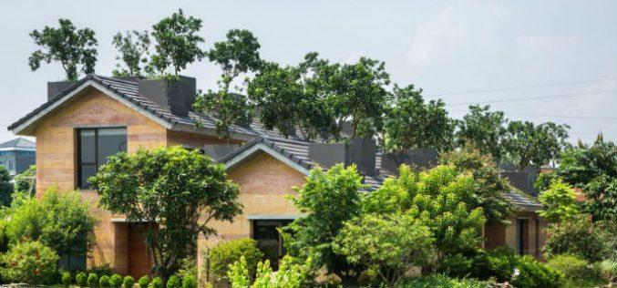 Ngôi nhà sở hữu vườn bưởi xanh tươi trên mái tại Hà Nội