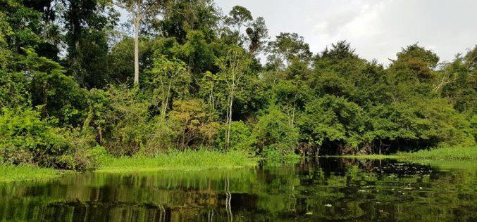 Chàng trai Việt đi vòng quanh thế giới đã tới rừng rậm Amazon