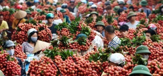 Thặng dư cán cân thương mại giữa Việt Nam với Úc  giảm dần