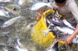 VASEP kiến nghị áp chuẩn xuất khẩu tiểu ngạch sang Trung Quốc