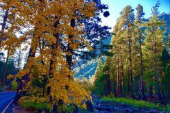 Đến thăm công viên quốc gia Yosemite miền Tây nước Mỹ