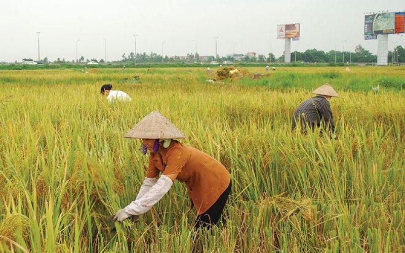 Huy động 45.000 tỷ đồng xã hội hóa đầu tư phát triển nông nghiệp
