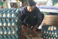 Trứng vịt Đồng Tháp đắt hàng, sốt giá