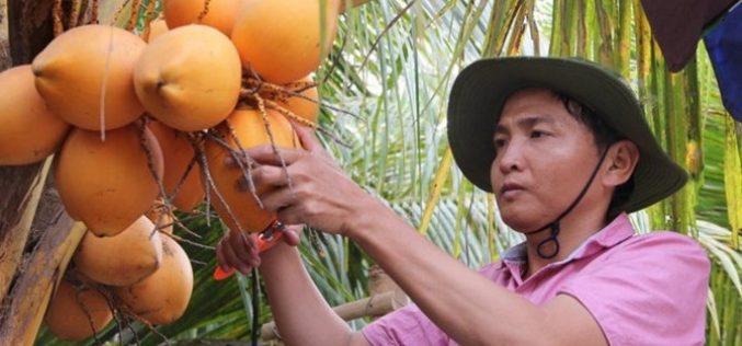 """""""Hái"""" ra tiền với giống dừa 2 màu độc đáo"""