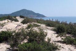 """Đất nền chỉ """"bụi cây trong cát trắng"""" tại Lăng Cô  bất ngờ sốt nóng"""