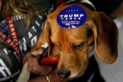 Chó ở Mỹ vạ lây vì cuộc chiến thương mại của ông Trump