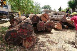 Hạt trưởng kiểm lâm bị khởi tố vì tiếp tay cho 'ông trùm' gỗ lậu