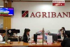 Agribank cho hộ sản xuất và cá nhân vay 653.500 tỷ đồng