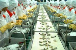 Doanh nghiệp 24h: Doanh nghiệp nào đã nhảy vọt trong bảng xếp hạng xuất khẩu thuỷ sản?