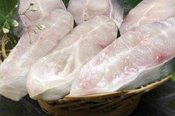 Thủy sản Cửu Long An Giang chuẩn bị trả cổ tức 20% bằng tiền
