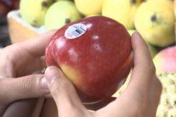 """Thị trường 24h: """"Loạn"""" tem trái cây, nhập nhèm xuất xứ"""