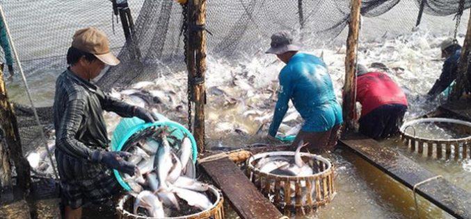 """Xuất khẩu cá tra kỷ lục 20 năm qua: Cảnh báo """"bẫy"""" từ thị trường Trung Quốc"""