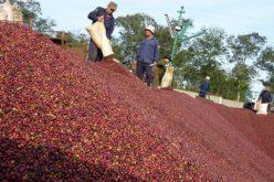 Đắk Lắk: Dấu hiệu đà tăng thu ngân sách