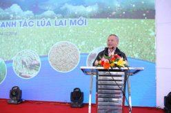 Corteva Agriscience ra mắt Mô hình canh tác lúa lai mới tại Việt Nam