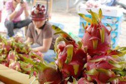 Thuế về 0% nhiều mặt hàng của Việt Nam vẫn mắc kẹt khi xuất ngoại