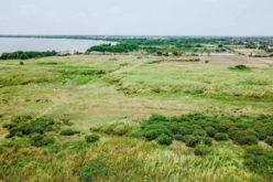 Khu công nghiệp Phước Đông bị bỏ hoang 12 năm vì doanh nghiệp không bàn giao đất