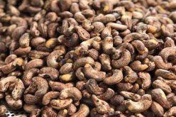 Giá xuất khẩu hạt điều giảm đến 21,9%