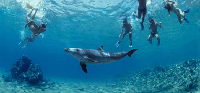 New Zealand cấm khách bơi cùng cá heo