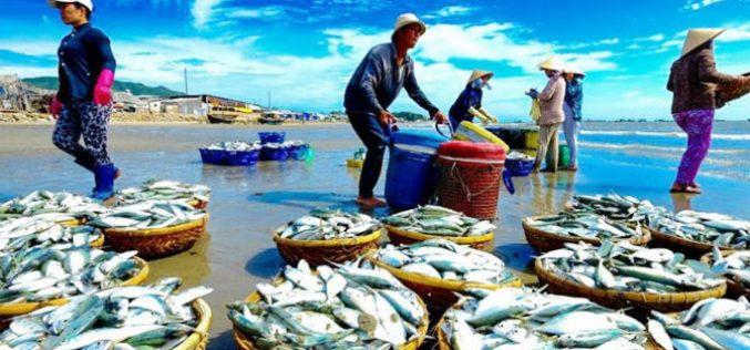 Thuỷ sản Việt tụt hạng vì thẻ vàng IUU