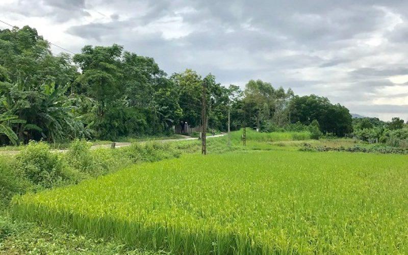Miễn, giảm thuế đất nông nghiệp mang lại diện mạo mới cho nông thôn