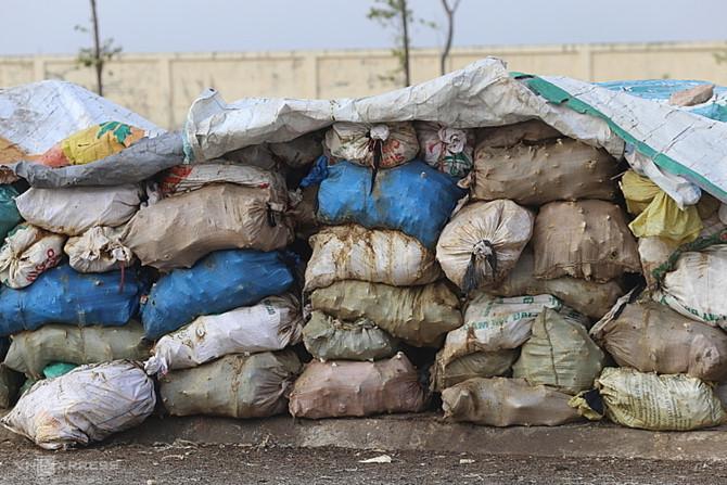 Hàng chục tấn xương động vật bốc mùi trong bãitập kết nhiều ngày đêm ở xã Bình Minh. Ảnh: Tất Định