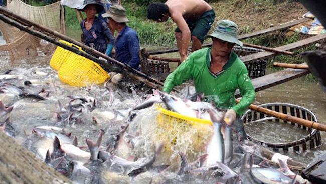 Xuất khẩu nông nghiệp - tiềm năng lớn của Việt Nam