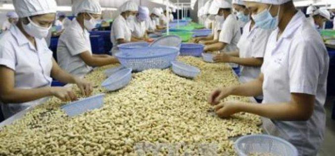VINACAS: Sẽ kiến nghị hạn chế nhập khẩu nhân điều vỏ lụa và nhân trắng