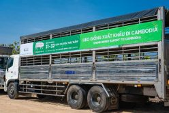 GREENFEED xuất khẩu heo giống chất lượng cao